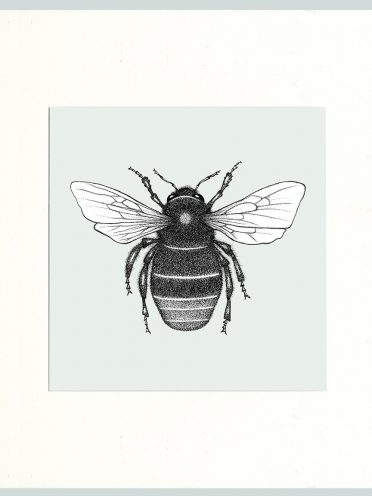 Red Tailed Bumble Bee (Cream)-0