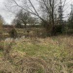 Meadow Beefayre