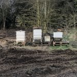 The Beefayre Hives